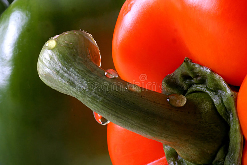 Download Red Pepper Stem Royalty Free Stock Image - Image: 230746