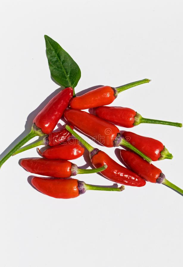 Red pepper very hot- The Scoville Scale royalty free stock photo