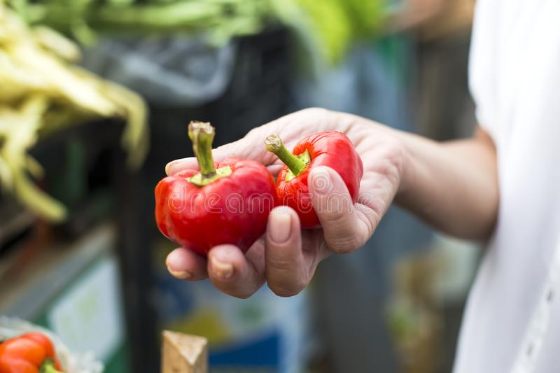 Red peppers in the hand royalty free stock photos