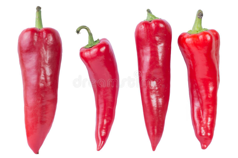 Red Peppers. On white background royalty free stock photo