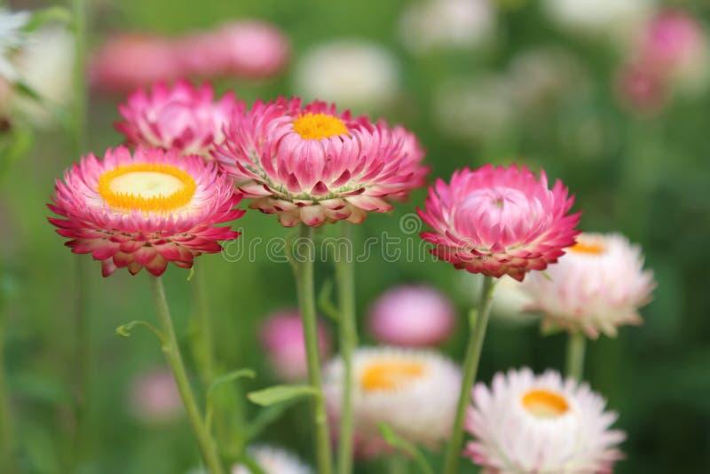 Red Petal Flower Free Public Domain Cc0 Image