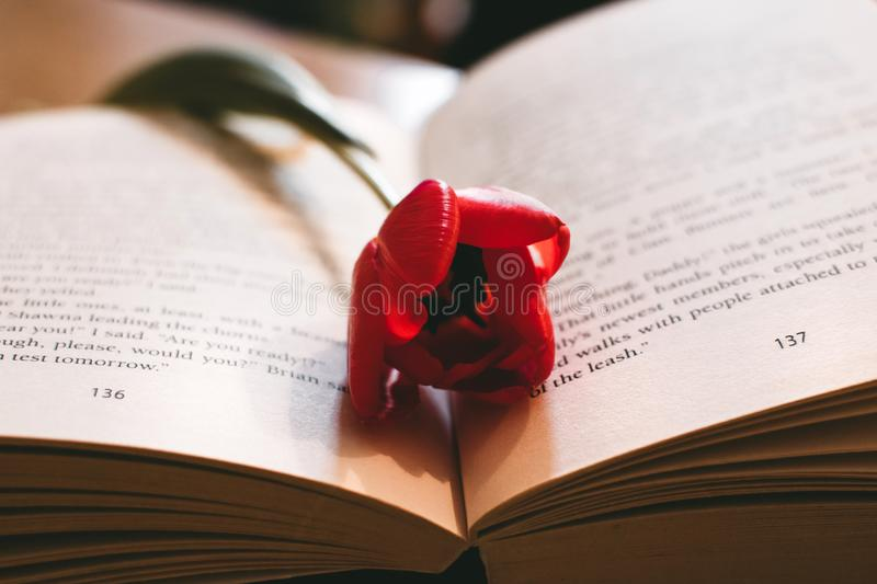 Red Petaled Flower Between the Book Page royalty free stock photos