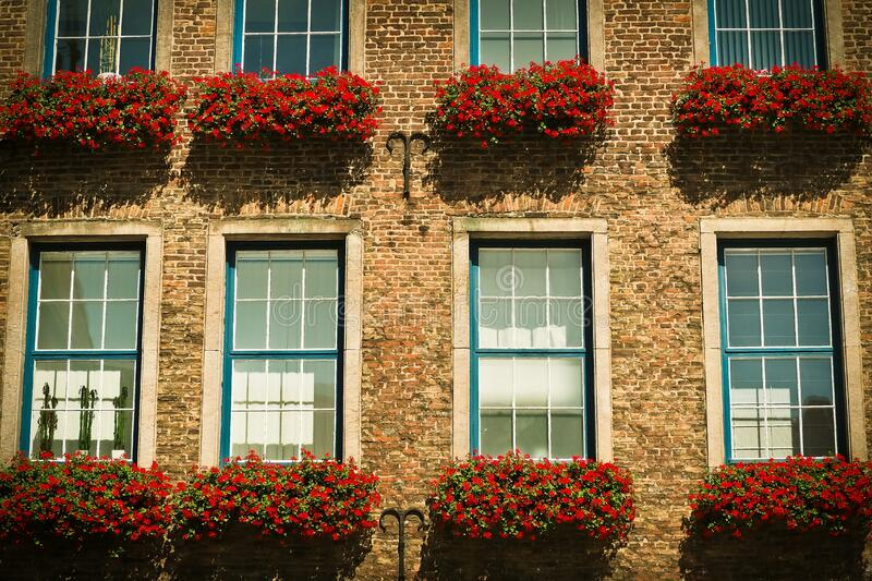 Red Petaled Flower in Front Brown Brick Wall Building during Daytime royalty free stock photos