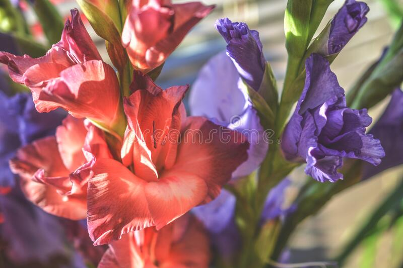 Red Petaled Flower and Purple Petaled Flower stock photos