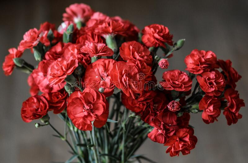 Red Petaled Flowers royalty free stock photos