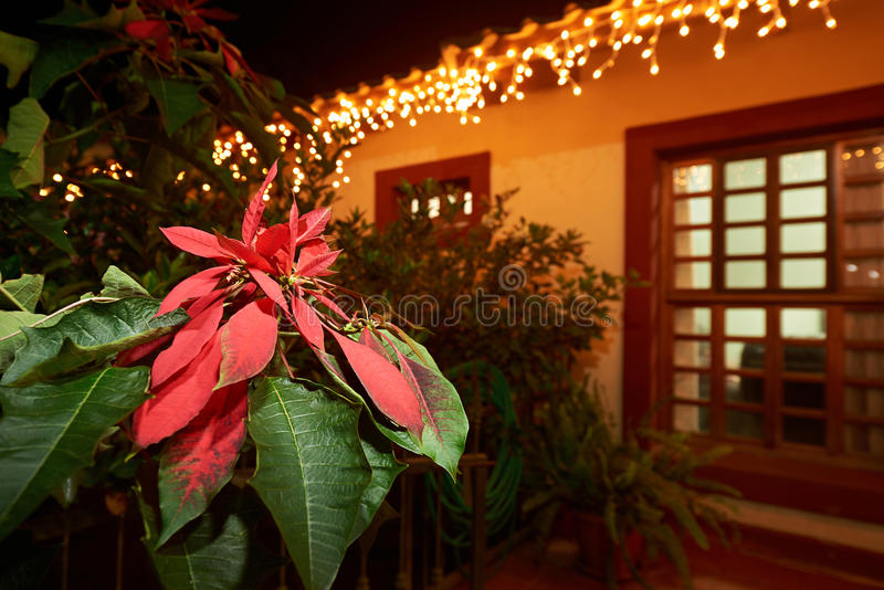 Red petals leaf flower. On christmas light decoration of house in tropics stock images