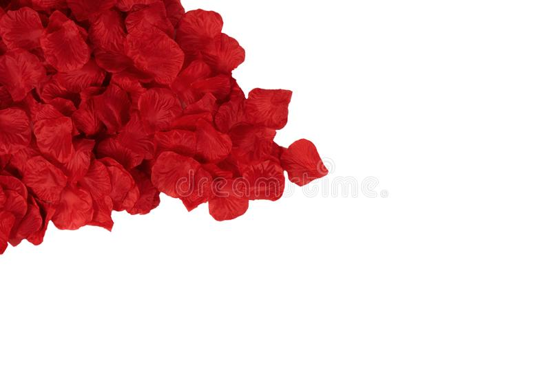 Red petals rose for design template. For wedding, valentine day mother grandmother day or wife birthday stock photography