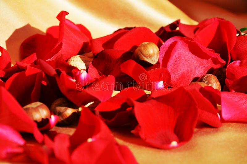 Red petals of roses, symbol royalty free stock images