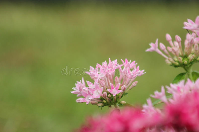 Red and pink flowers blurred background royalty free stock images