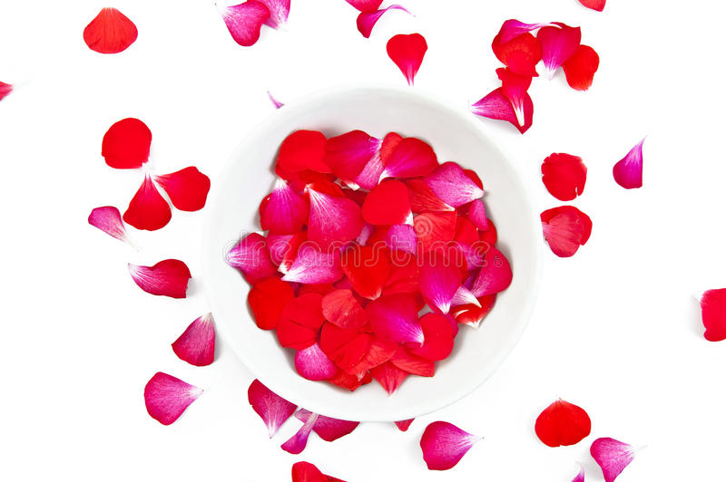 Red and pink petals stock photography
