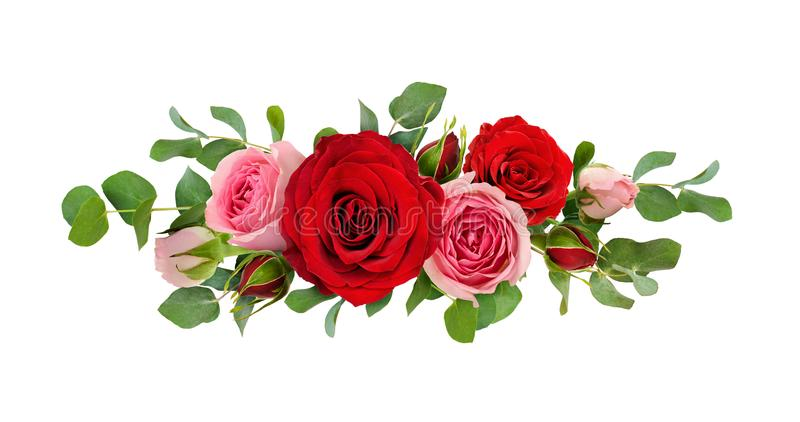 Red and pink rose flowers with eucalyptus leaves in a line arrangement. Isolated on white background. Flat lay. Top view stock images