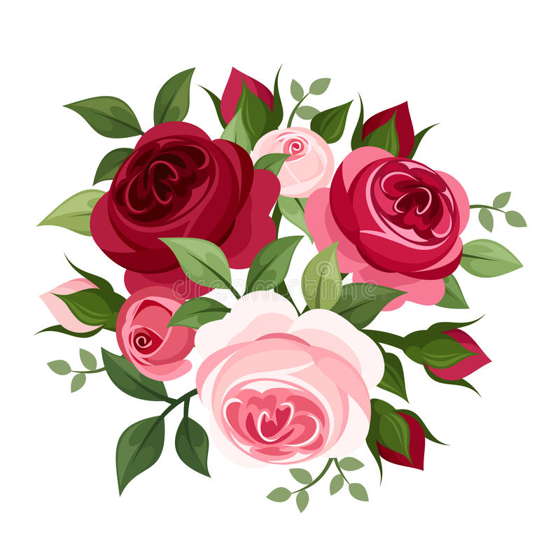 Red and pink roses. Red and pink English roses and rose buds isolated on a white background royalty free illustration