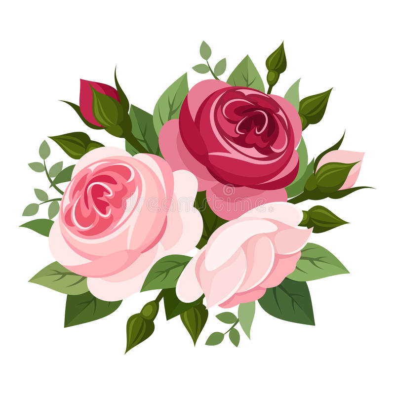 Red and pink roses. Illustration of red and pink English roses, rose buds and leaves isolated on a white background vector illustration