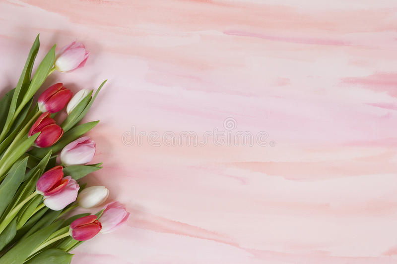 Red and pink tulips on pastel watercolor - spring vector illustration