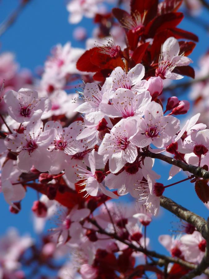 Red Pink And White Petaled Tree During Daytime Free Public Domain Cc0 Image