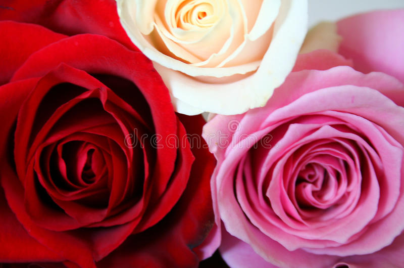 Red, pink and white roses. In a bouquet stock photo