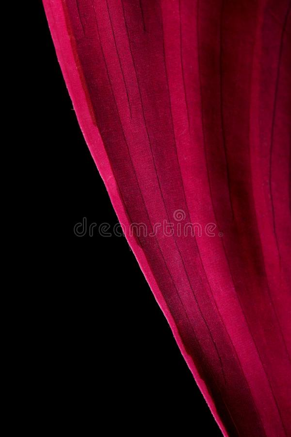 Red plant leaf stock images