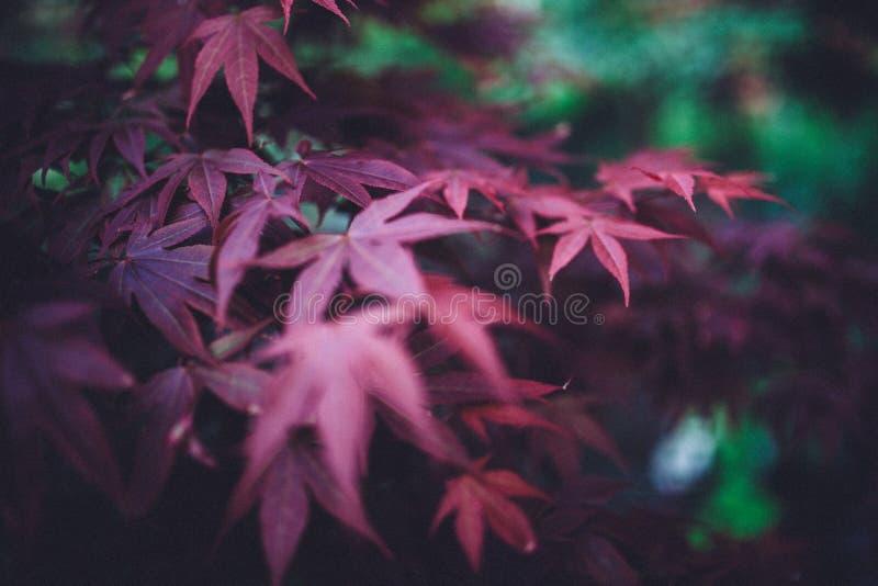 Red Plant Leaf Free Public Domain Cc0 Image