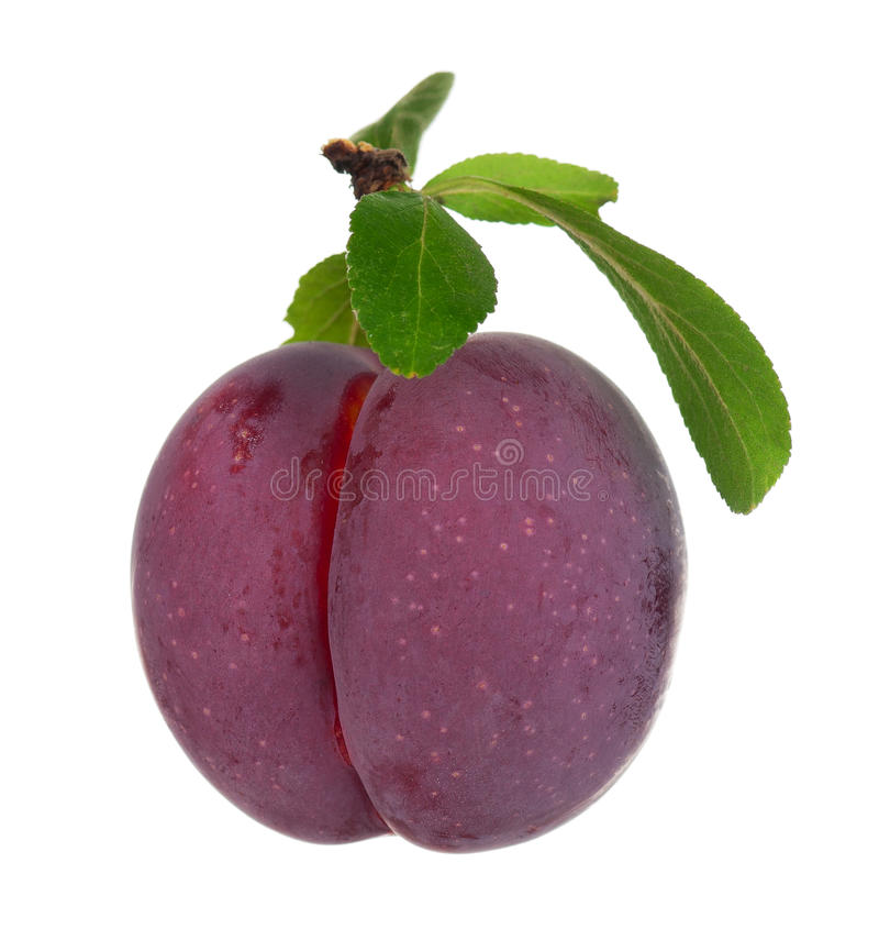 Download Red Plum Royalty Free Stock Photography - Image: 26925017
