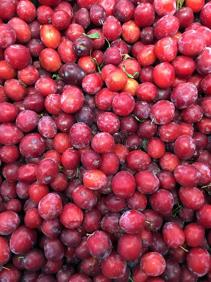 Red plum in large quantities stock photography