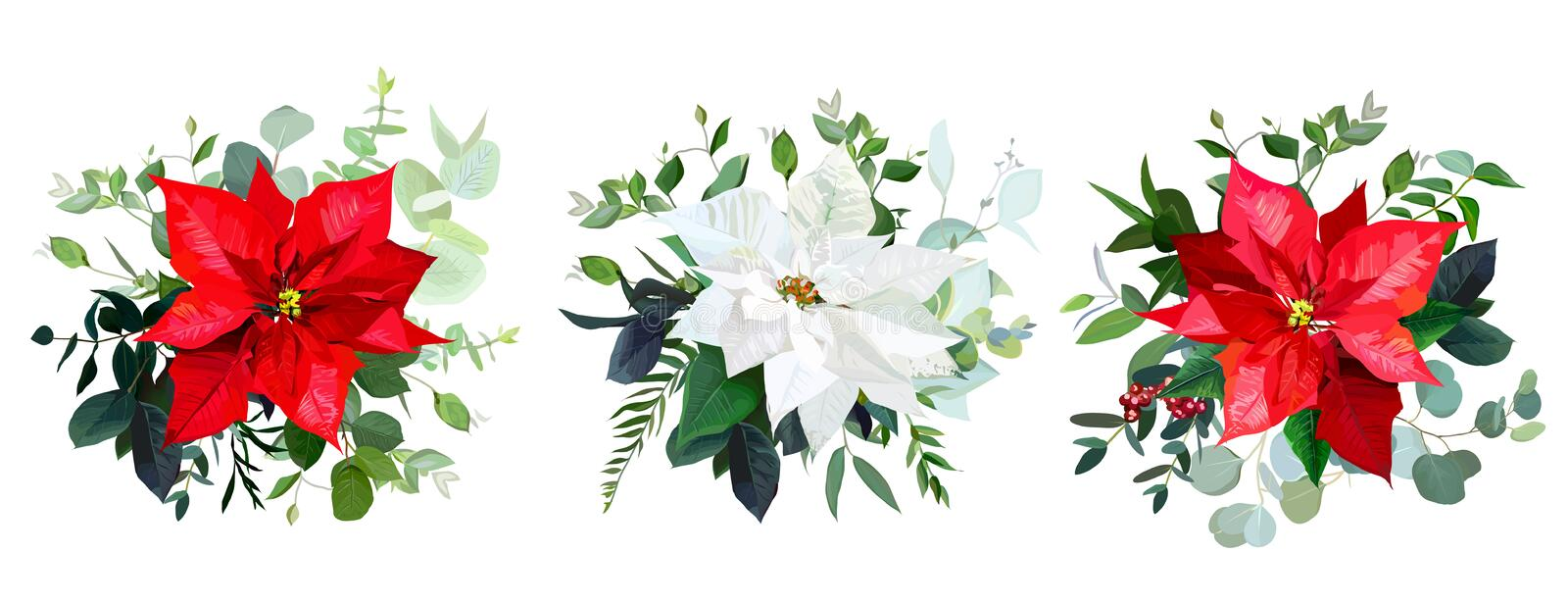 Red poinsettia flowers, christmas greenery, emerald eucalyptus vector illustration
