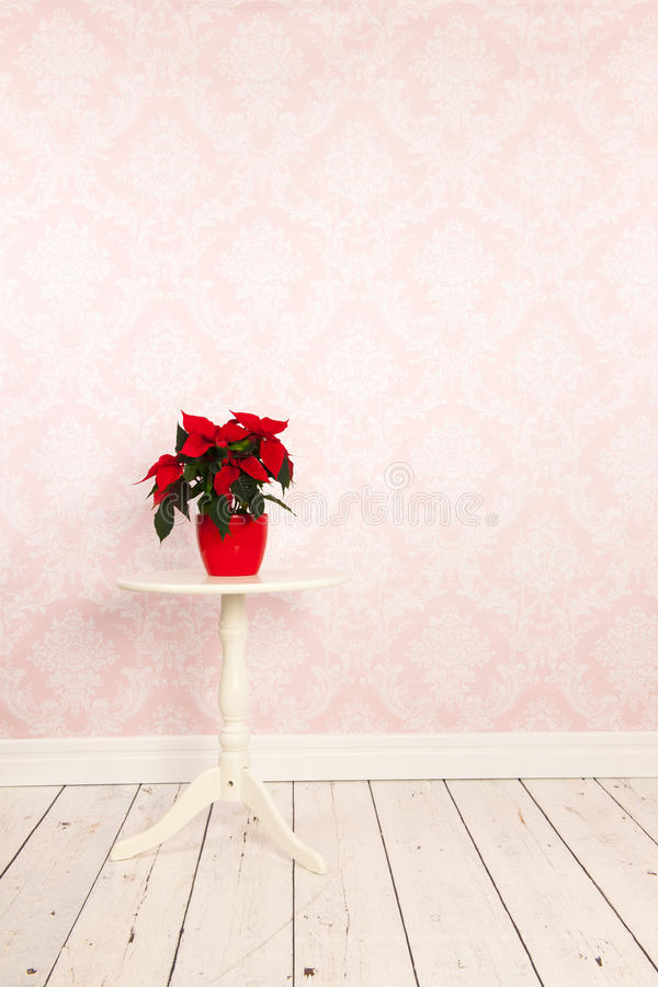 Red Poinsettia in vintage room royalty free stock photos