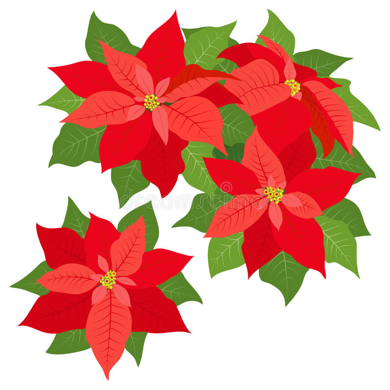 Download Red Poinsettias Decorations Stock Vector - Illustration: 33724675