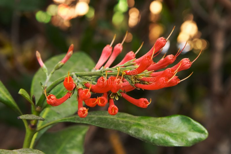 Download Red Pointy Flowers stock photo. Image of garden, green - 283564