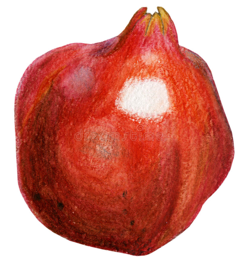 Red pomegranate stock photo