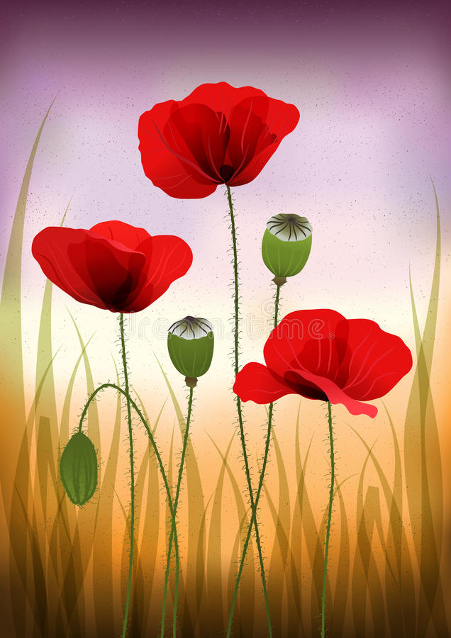 Red poppies – vintage background royalty free illustration