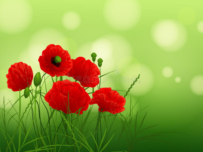 Download Red poppies stock illustration. Image of defocused, summer - 23620412