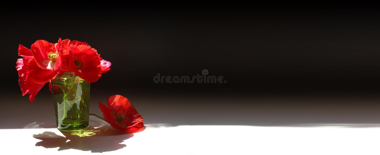 Red poppies banner. Three red poppies, two in a transparent green glass with water on a dark black background with bright white light foreground and plenty of stock images