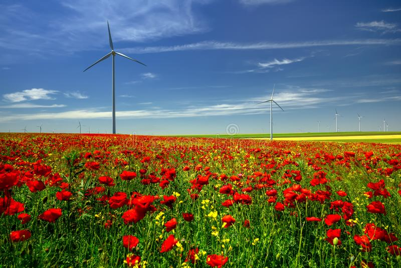Red poppies filed in Dobrogea with eolian windmill farm, Romania. Red poppies in Dobrogea with eolian windmill farm in the summer time Constanta , Romania stock photo
