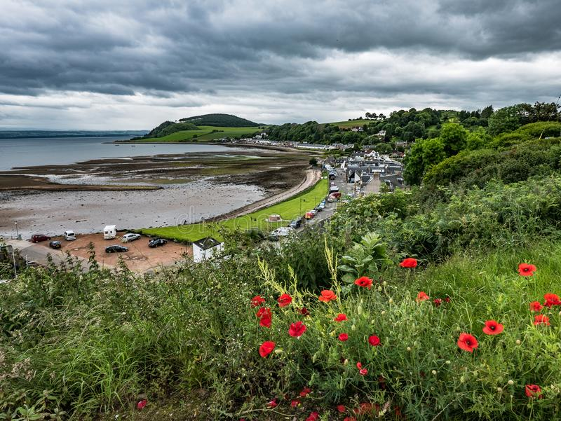 Red Poppies Flowering on Hillside above Avoch, Scotland royalty free stock photography