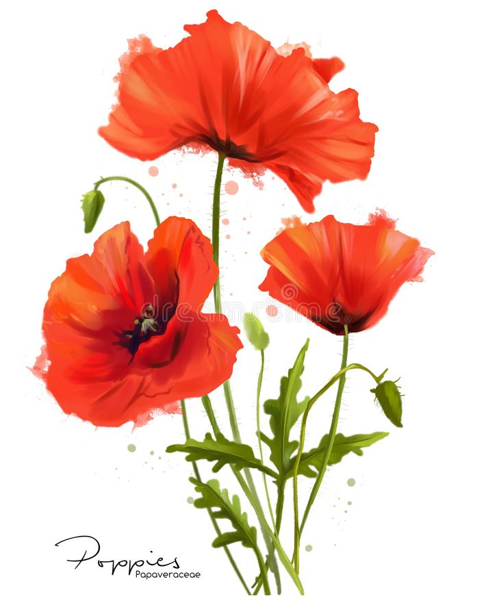 Free Red Poppies Flowers And Splashes Royalty Free Stock Image - 107674186