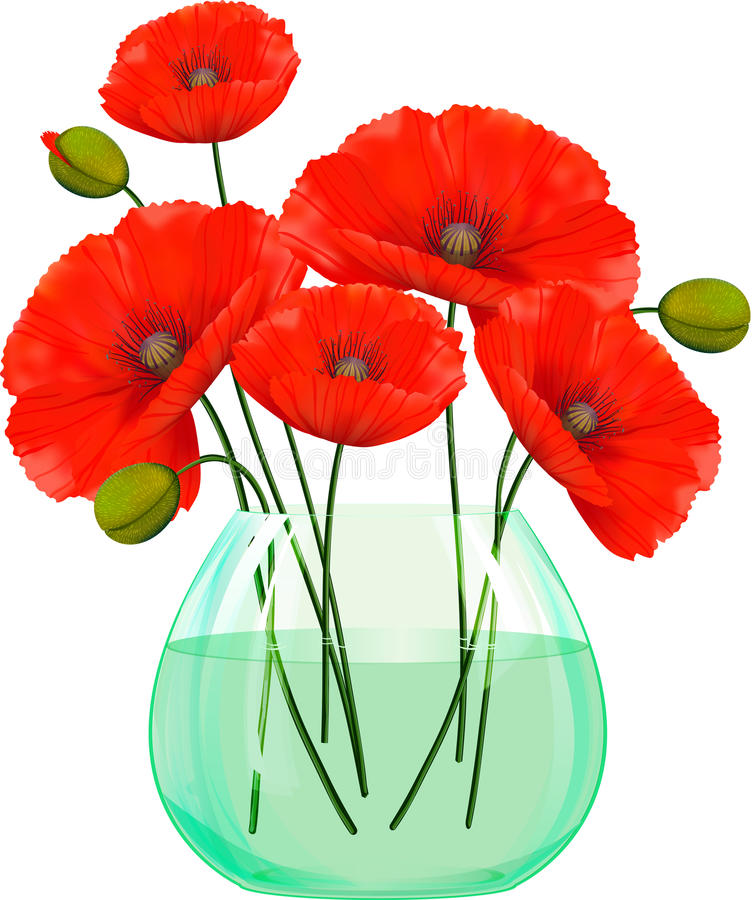 Red poppies flowers in glass vase. vector illustration