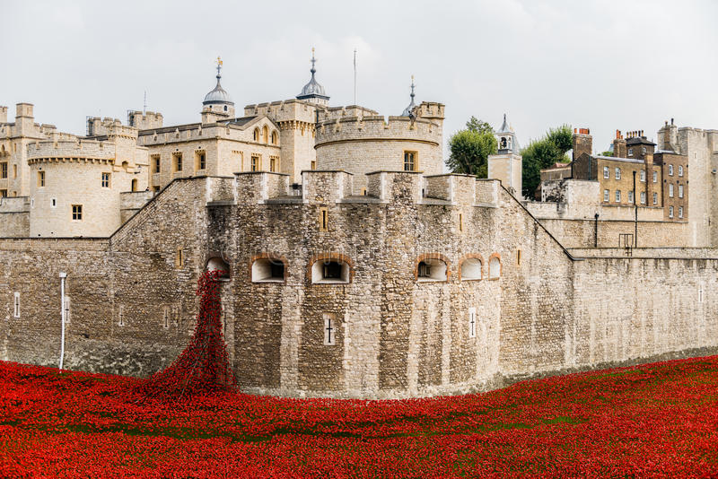 Red poppies in the moat of the Tower of London. Her Majestys Royal Palace and Fortress, known as the Tower of London, is a historic castle located on the north royalty free stock photos
