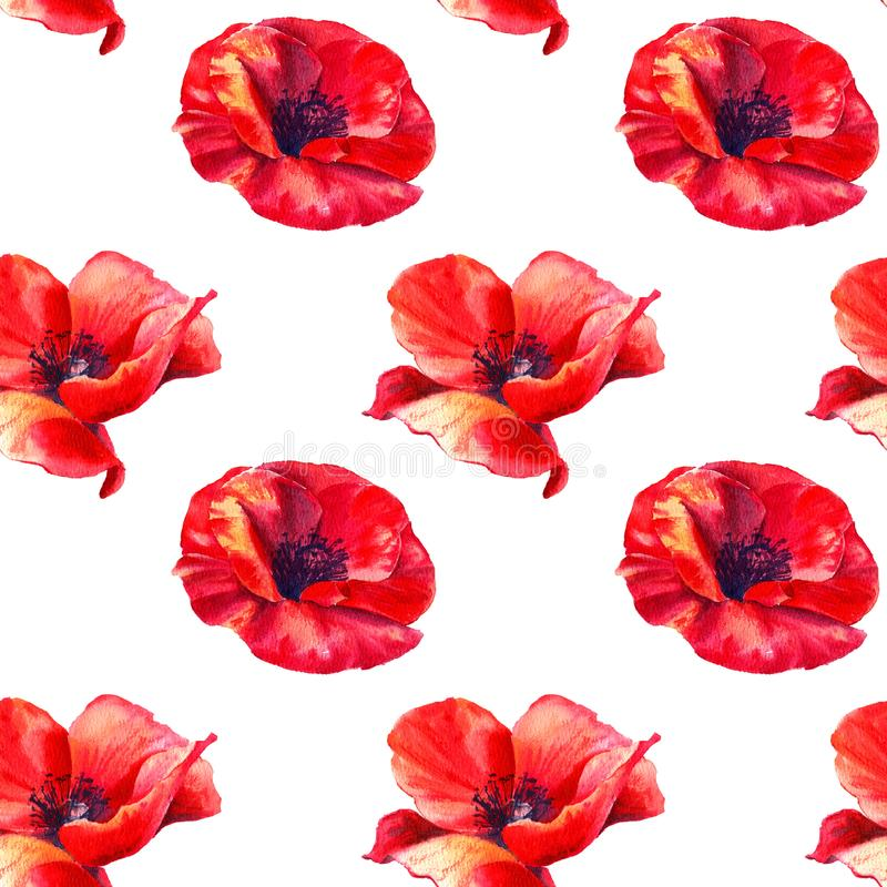 Red poppies on a white background. Floral seamless pattern with big bright flowers.Summer watercolour illustration for. Red poppies on a white background. Floral royalty free stock photos