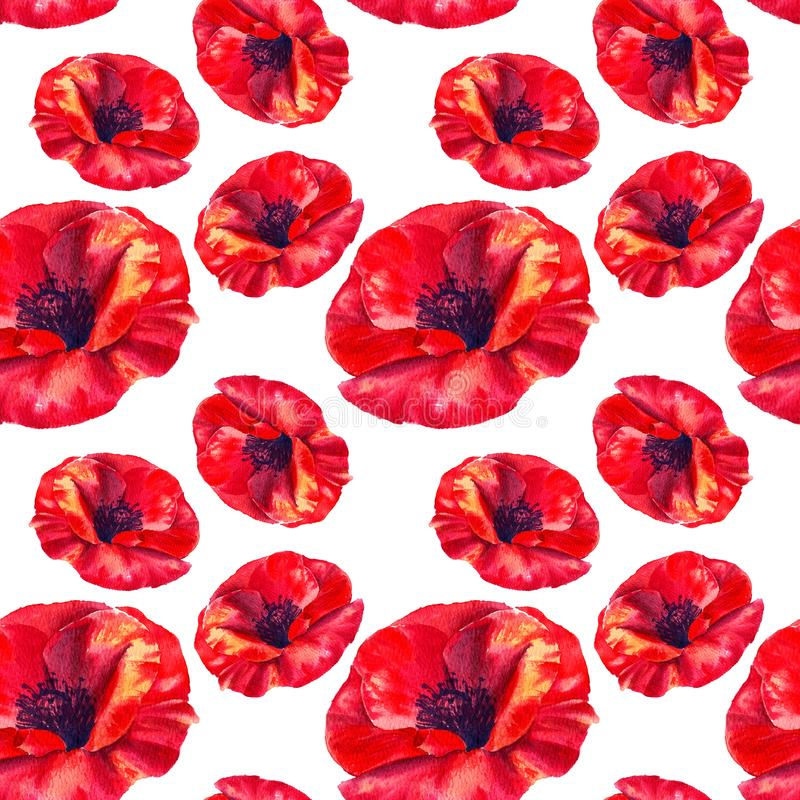 Red poppies on a white background. Floral seamless pattern with big bright flowers.Summer watercolour illustration for stock illustration