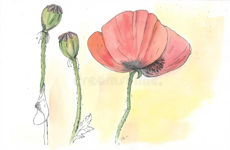 Red poppies, yellow background vector illustration