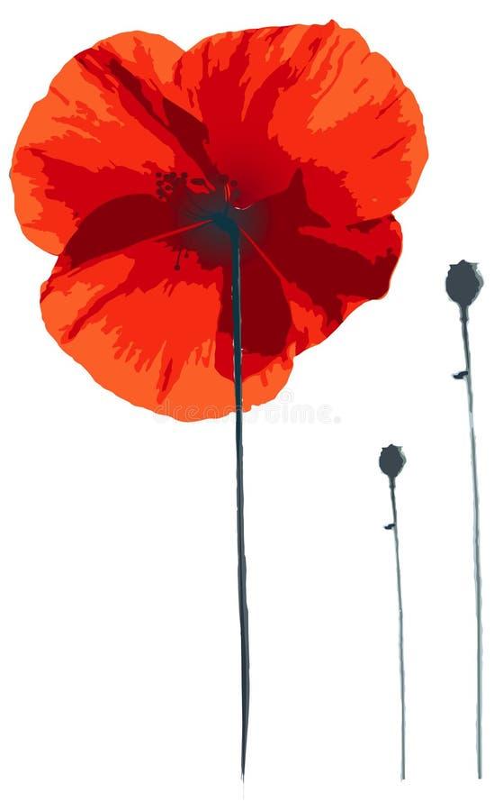 Red poppy. On white, illustration stock illustration