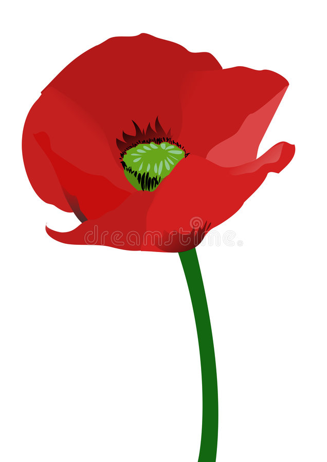 Red poppy royalty free illustration