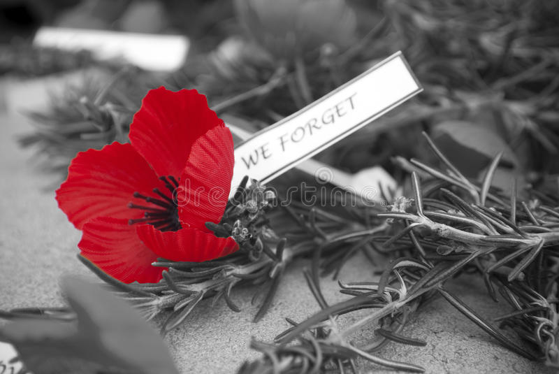 Red poppy anzac day remembrance day stock image