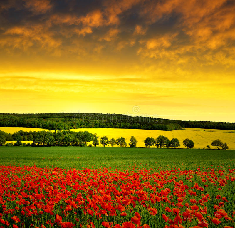 Download Red poppy field stock image. Image of rural, dawn, meadow - 39268363