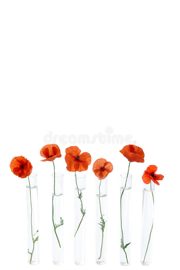 Red Poppy in test tube for herbal medicine and essential oil on wooden background. The concept of herbal medine and royalty free stock photos
