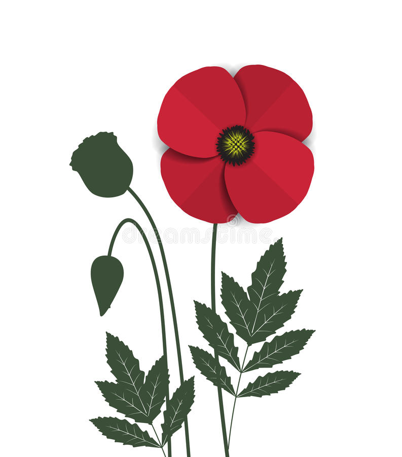 Red Poppy. Vector red romantic poppy flowers and grass vector illustration