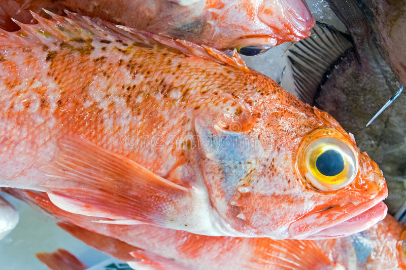 Red porgy fish for sale. At a market in Portugal royalty free stock photography