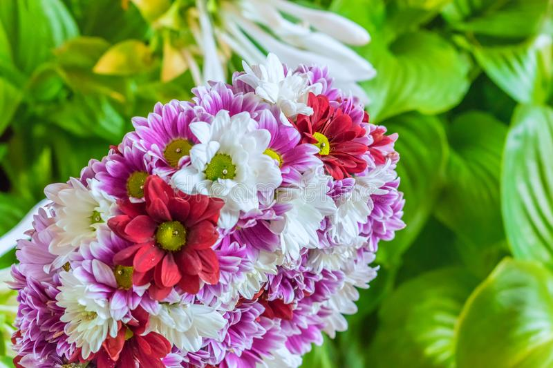 Red purple and pink flowers royalty free stock photos
