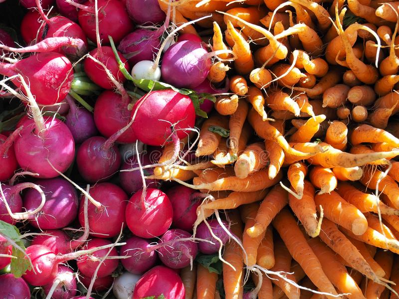 Red and purple radishes, orange carrots for sale at an agricultural market in New York. Bright background stock photos