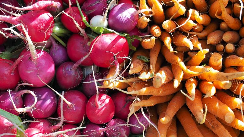 Red and purple radishes, orange carrots for sale at an agricultural market in New York. Bright background royalty free stock photography